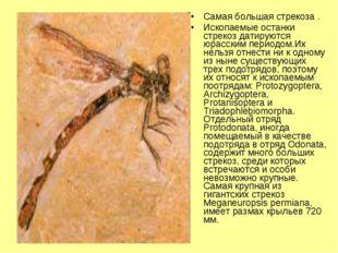 Самая большая стрекоза . Ископаемые останки стрекоз датируются юрасским перио
