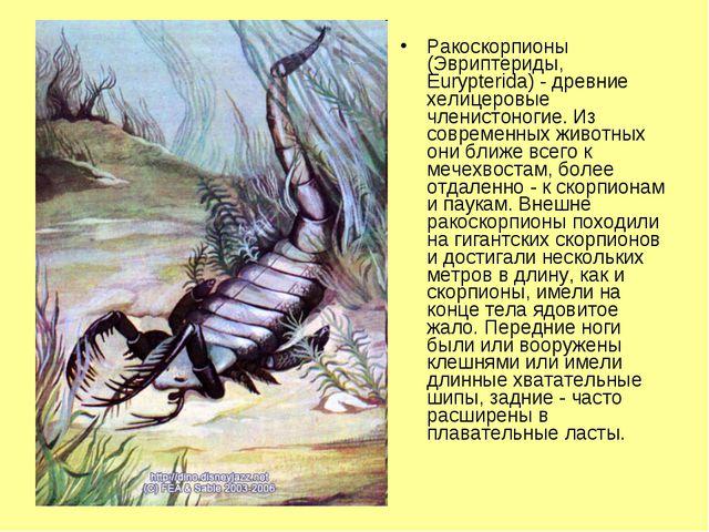 Ракоскорпионы (Эвриптериды, Eurypterida) - древние хелицеровые членистоногие....