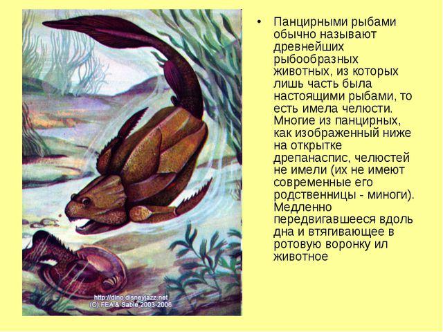 Панцирными рыбами обычно называют древнейших рыбообразных животных, из которы...