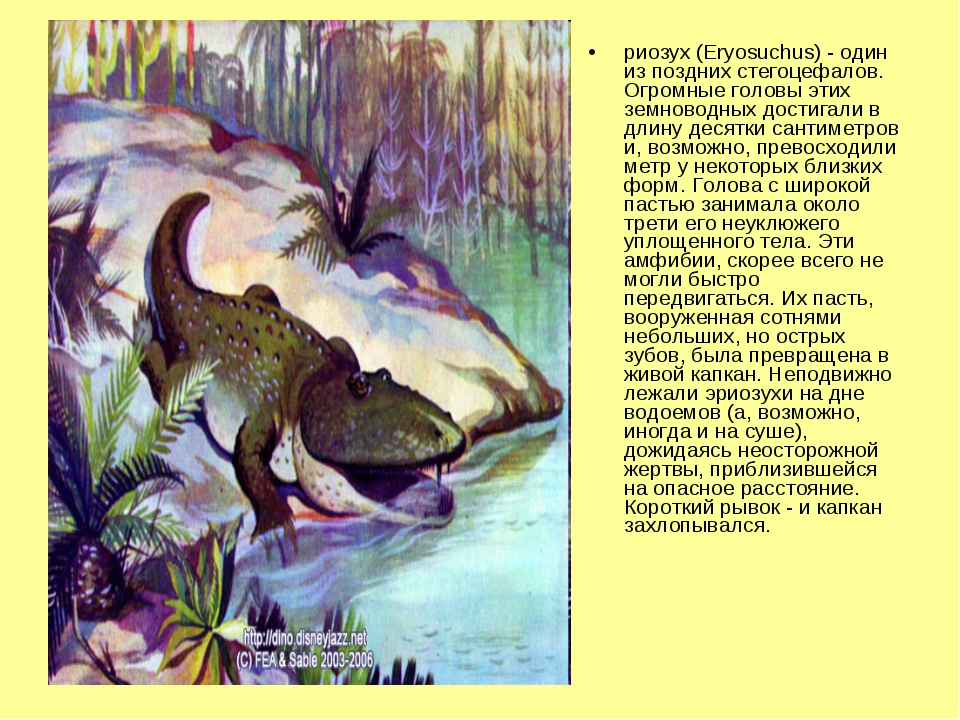 риозух (Eryosuchus) - один из поздних стегоцефалов. Огромные головы этих земн...