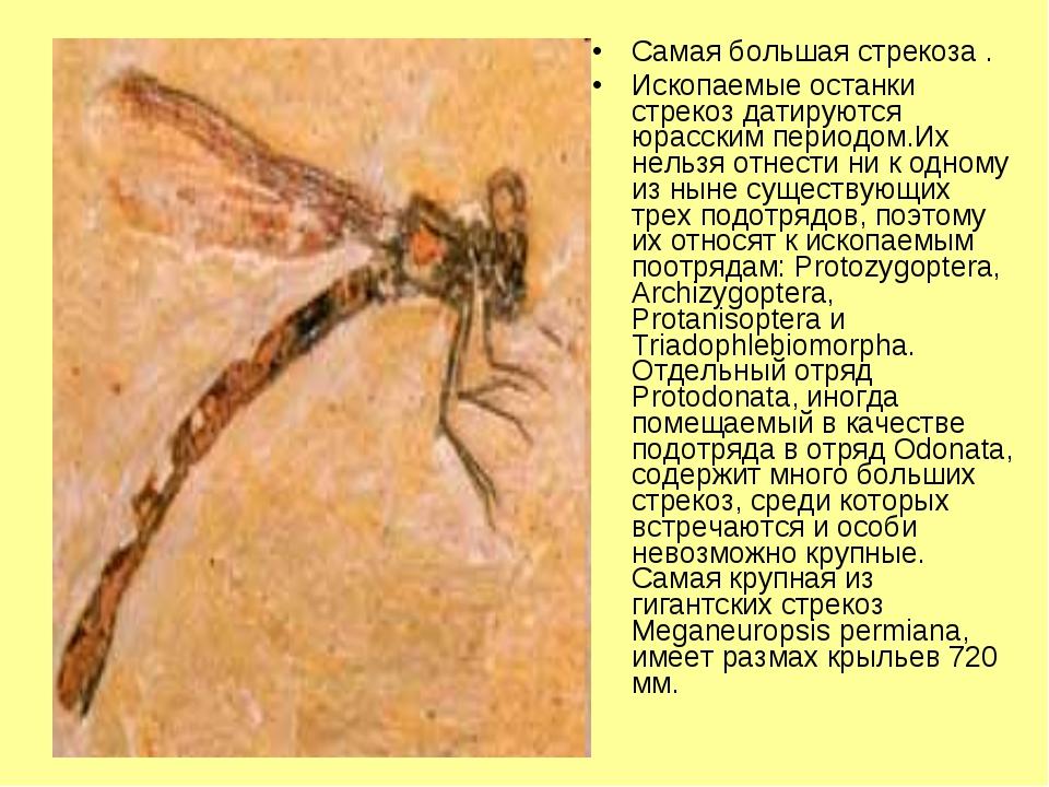 Самая большая стрекоза . Ископаемые останки стрекоз датируются юрасским перио...