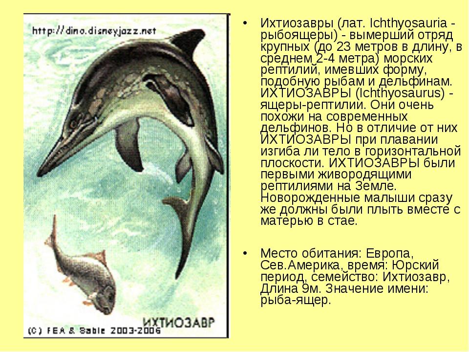 Ихтиозавры (лат. Ichthyosauria - рыбоящеры) - вымерший отряд крупных (до 23 м...