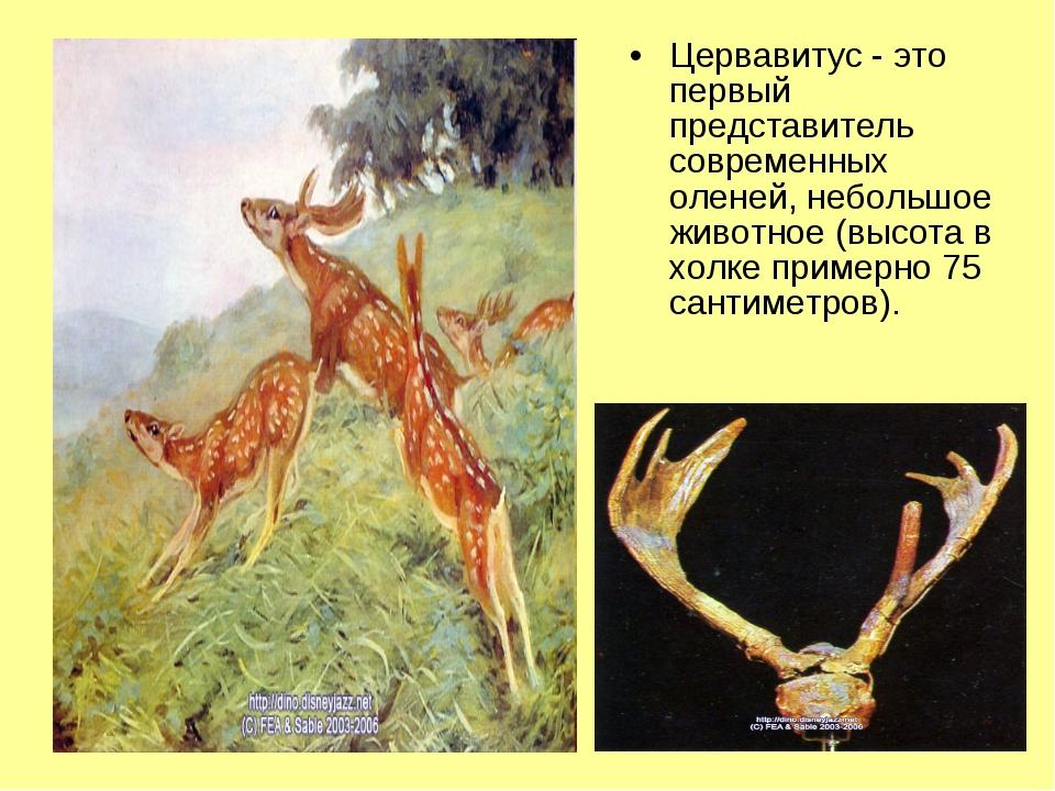 Цервавитус - это первый представитель современных оленей, небольшое животное...