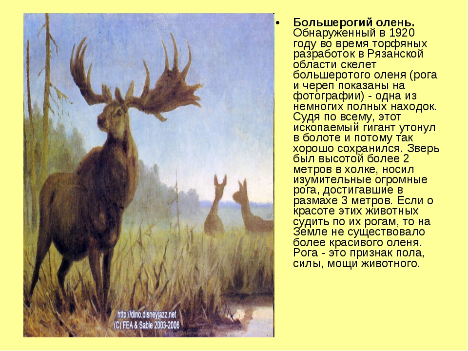 Большерогий олень. Обнаруженный в 1920 году во время торфяных разработок в Ря...