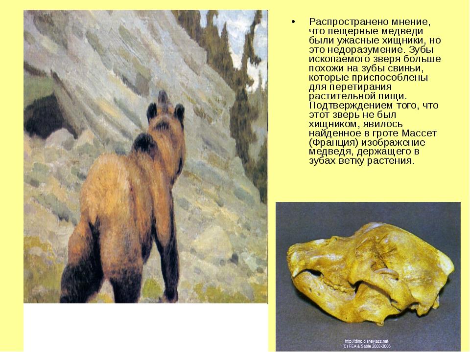 Распространено мнение, что пещерные медведи были ужасные хищники, но это недо...