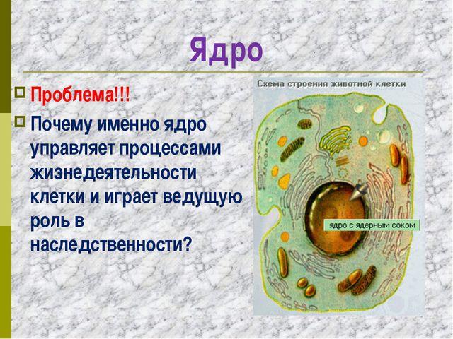 Ядро Проблема!!! Почему именно ядро управляет процессами жизнедеятельности кл...