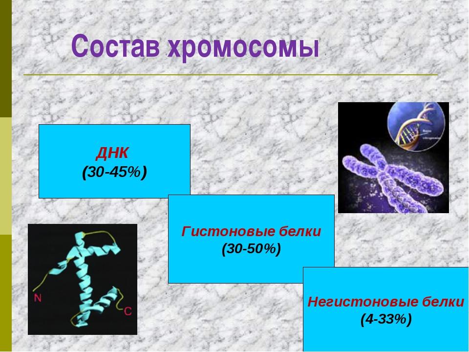 Состав хромосомы ДНК (30-45%) Гистоновые белки (30-50%) Негистоновые белки (...
