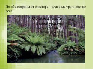 По обе стороны от экватора – влажные тропические леса.