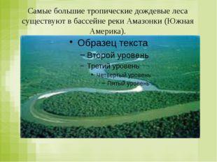 Самые большие тропические дождевые леса существуют в бассейне реки Амазонки (