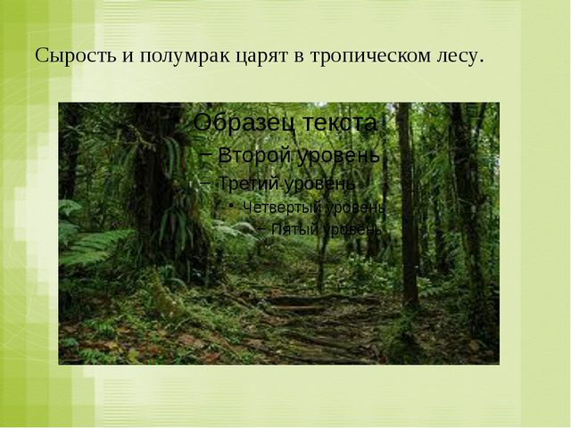 Сырость и полумрак царят в тропическом лесу.