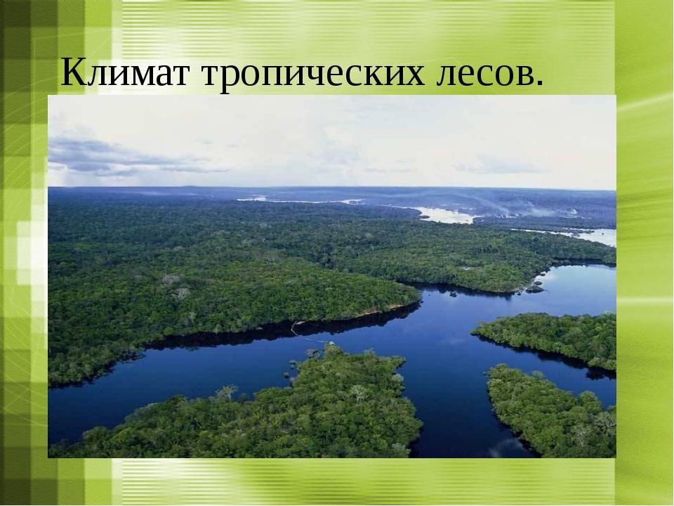 Климат тропических лесов.