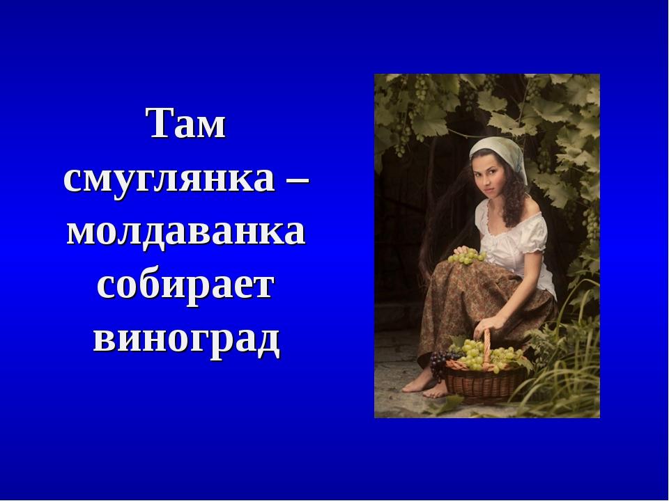 Там смуглянка – молдаванка собирает виноград