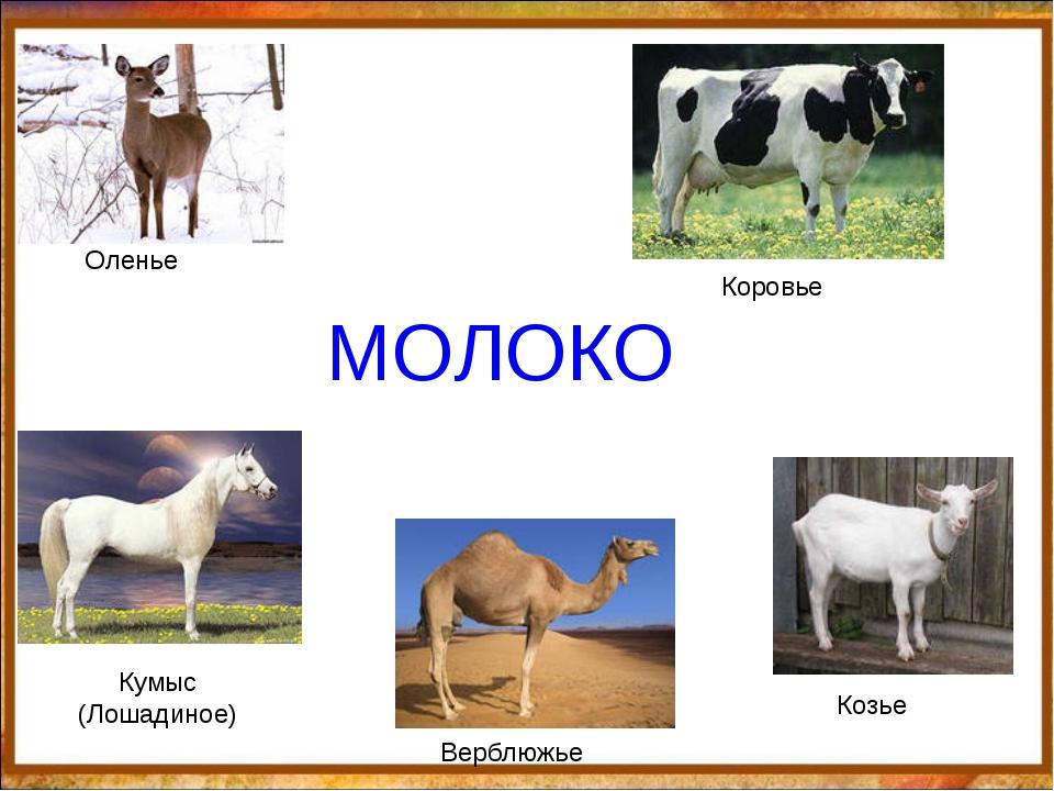 МОЛОКО Оленье Коровье Кумыс (Лошадиное) Верблюжье Козье