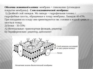 Оболочка животной клетки: мембрана + гликокаликс (углеводное покрытие мембран