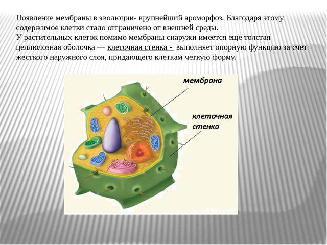 Появление мембраны в эволюции- крупнейший ароморфоз. Благодаря этому содержи...