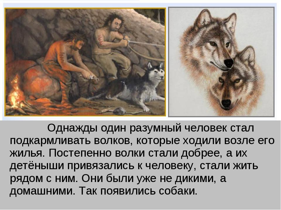 ВЫБОРУ животные и люди сочинение этом еще