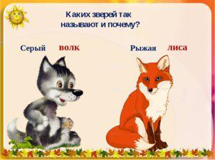 Каких зверей так называют и почему? Серый волк Рыжая лиса