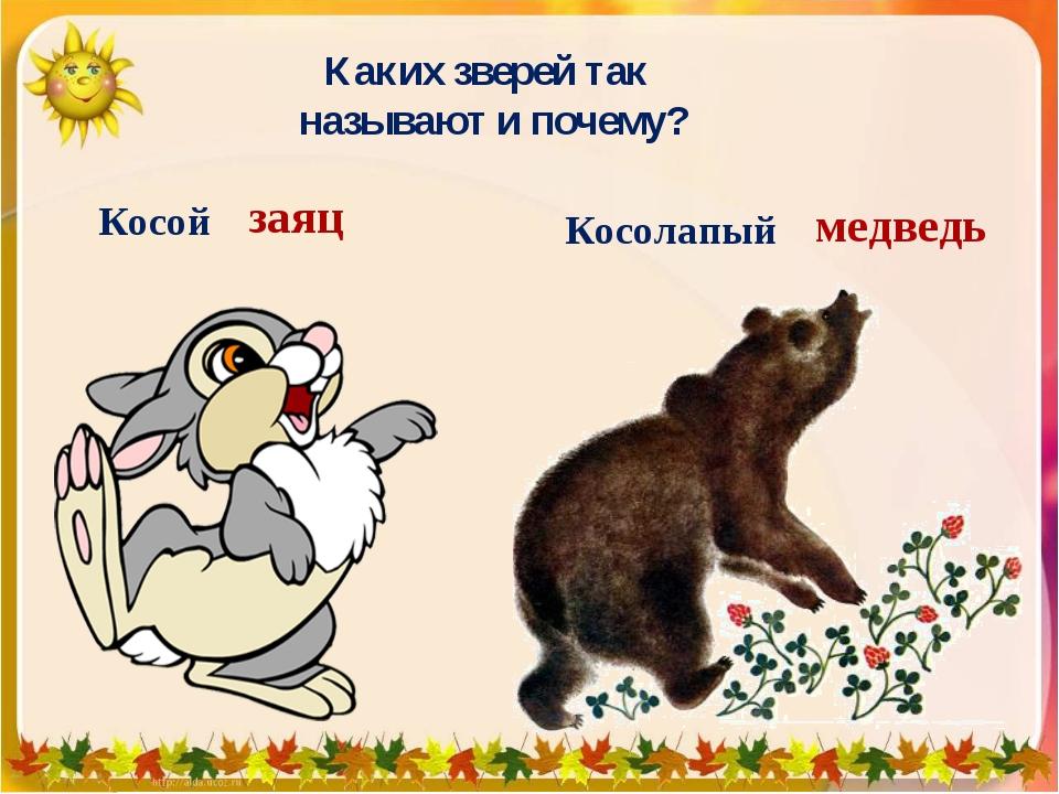 Каких зверей так называют и почему? Косой Косолапый медведь заяц