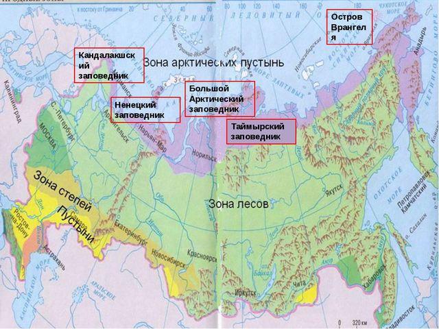 Кандалакшский заповедник Ненецкий заповедник Большой Арктический заповедник...