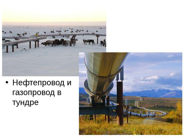 Нефтепровод и газопровод в тундре