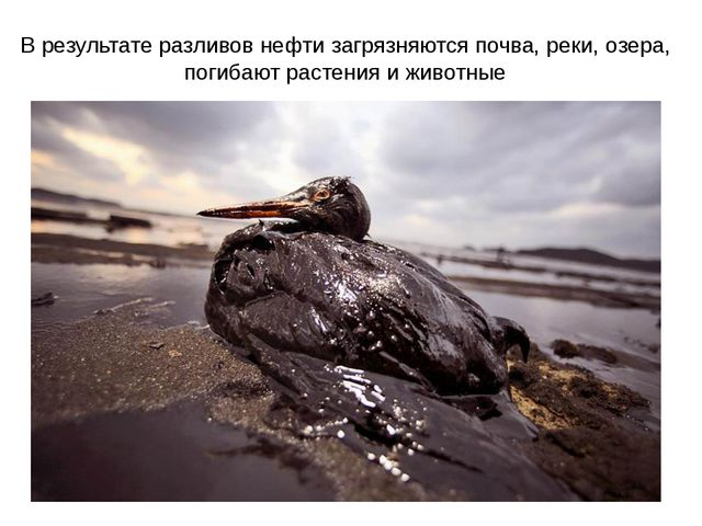 В результате разливов нефти загрязняются почва, реки, озера, погибают растени...