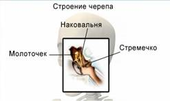 http://static.interneturok.cdnvideo.ru/content/konspekt_image/67608/d3609540_1357_0131_0813_12313d0128c8.jpg