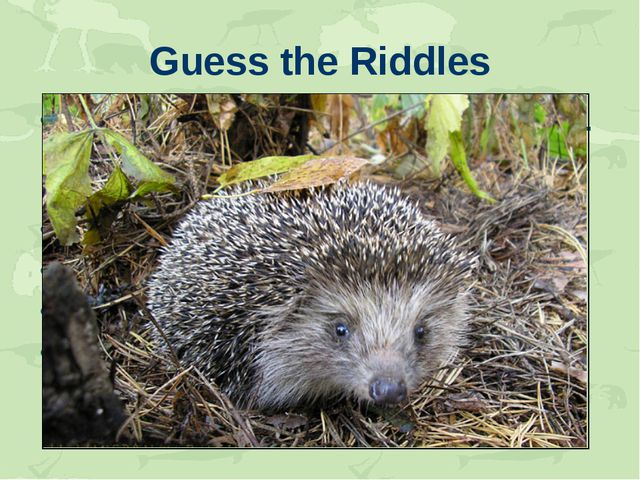 Guess the Riddles Long ears, long ears. They like carrots. They like hay. The...