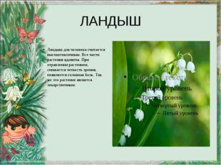 ЛАНДЫШ Ландыш для человека считается высокотоксичным. Все части растения ядов