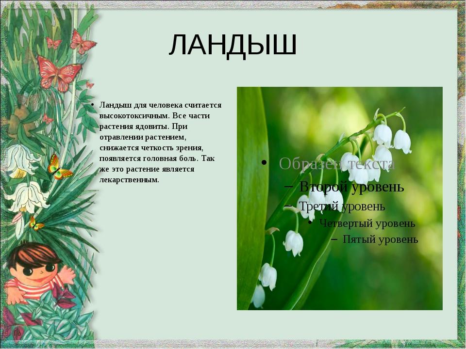 ЛАНДЫШ Ландыш для человека считается высокотоксичным. Все части растения ядов...