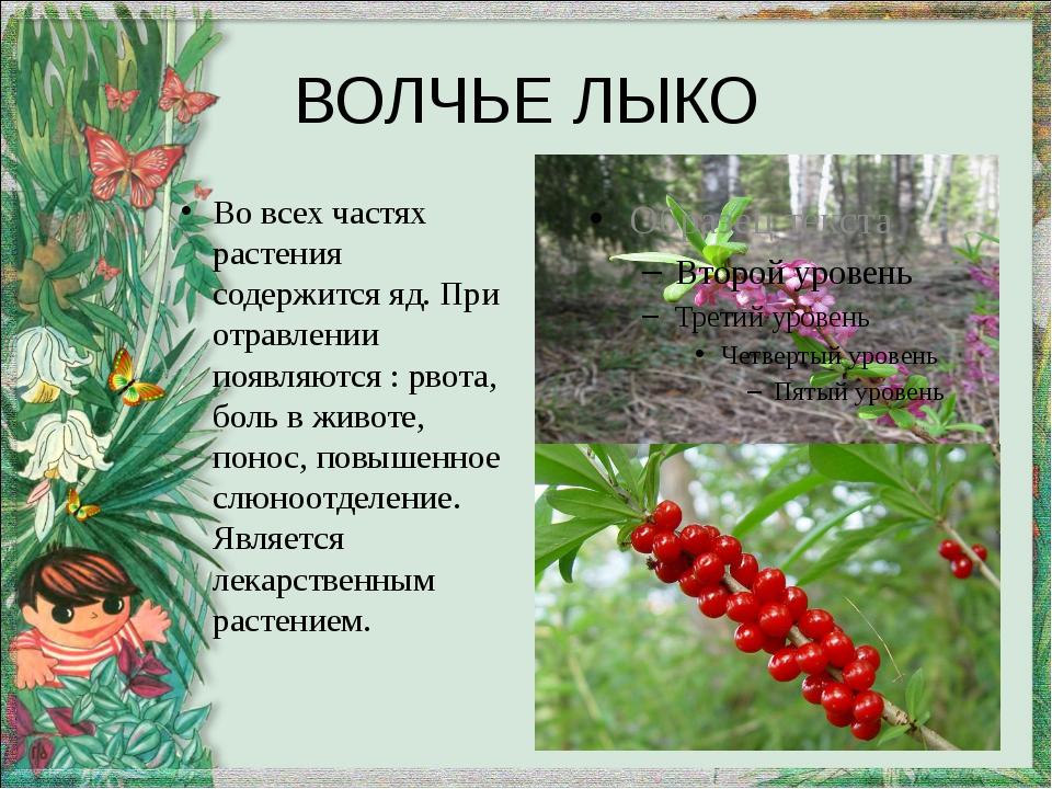 ВОЛЧЬЕ ЛЫКО Во всех частях растения содержится яд. При отравлении появляются...