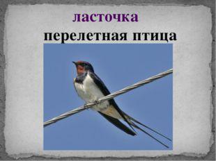 ласточка перелетная птица