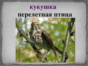 кукушка перелетная птица