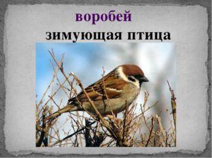 воробей зимующая птица