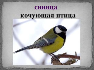 синица кочующая птица