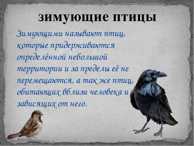 зимующие птицы Зимующими называют птиц, которые придерживаются определённой н...