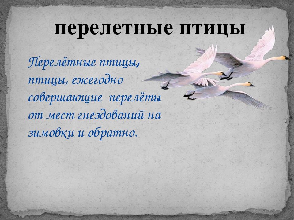 перелетные птицы Перелётные птицы, птицы, ежегодно совершающие перелёты от ме...