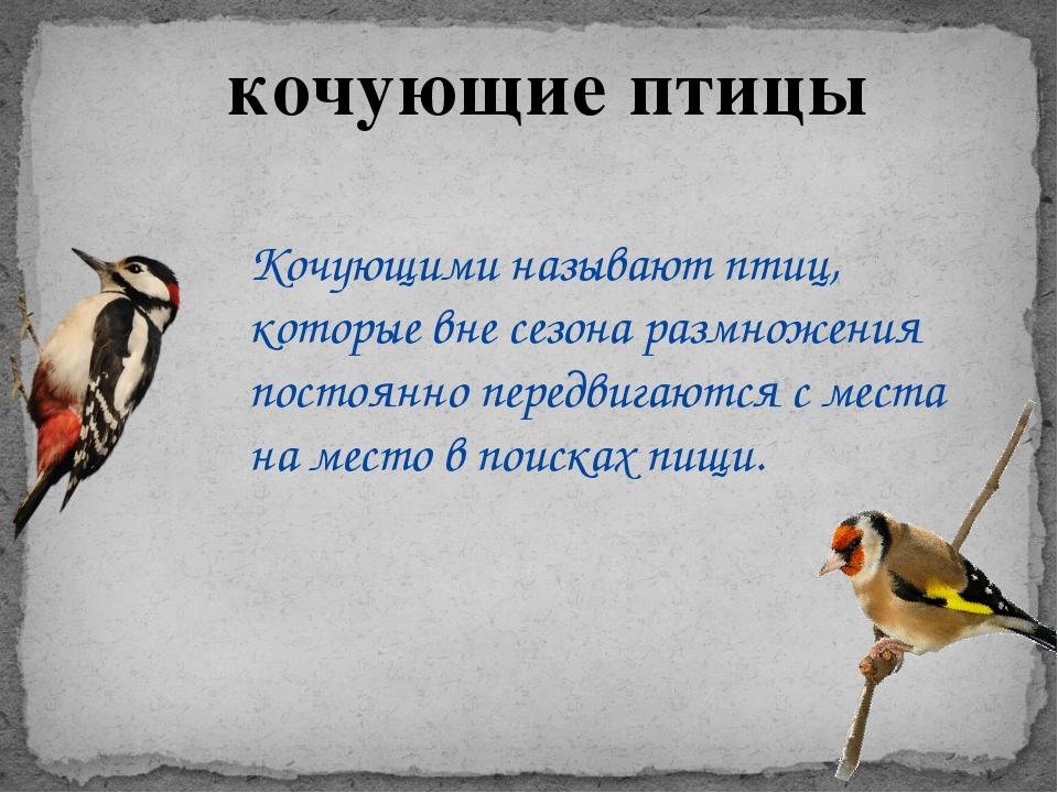 кочующие птицы Кочующими называют птиц, которые вне сезона размножения постоя...