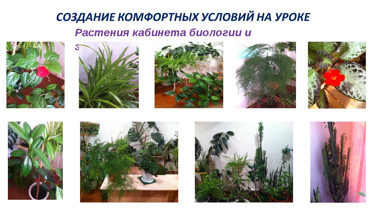 Растения кабинета биологии и экологии
