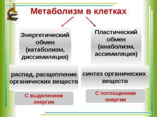 Метаболизм в клетках Энергетический обмен (катаболизм, диссимиляция) Пластиче
