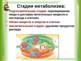 Стадии метаболизма: Подготовительная стадия: переваривание пищи и доставка пи