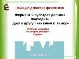 Принцип действия ферментов Фермент и субстрат должны подходить друг к другу «
