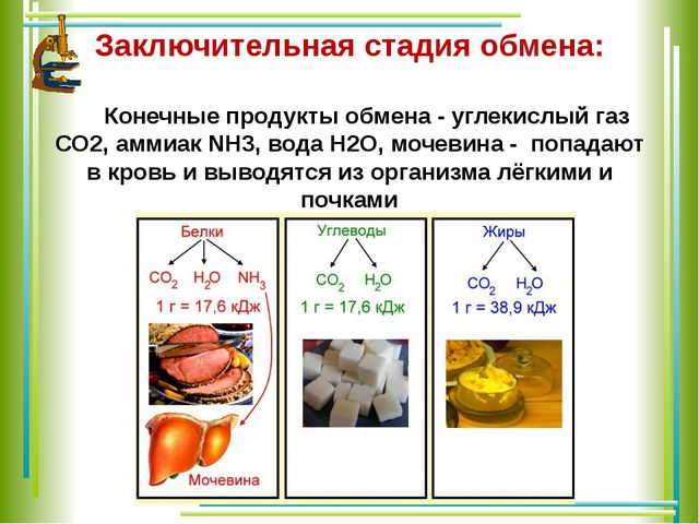 Заключительная стадия обмена: Конечные продукты обмена - углекислый газ СО2,...