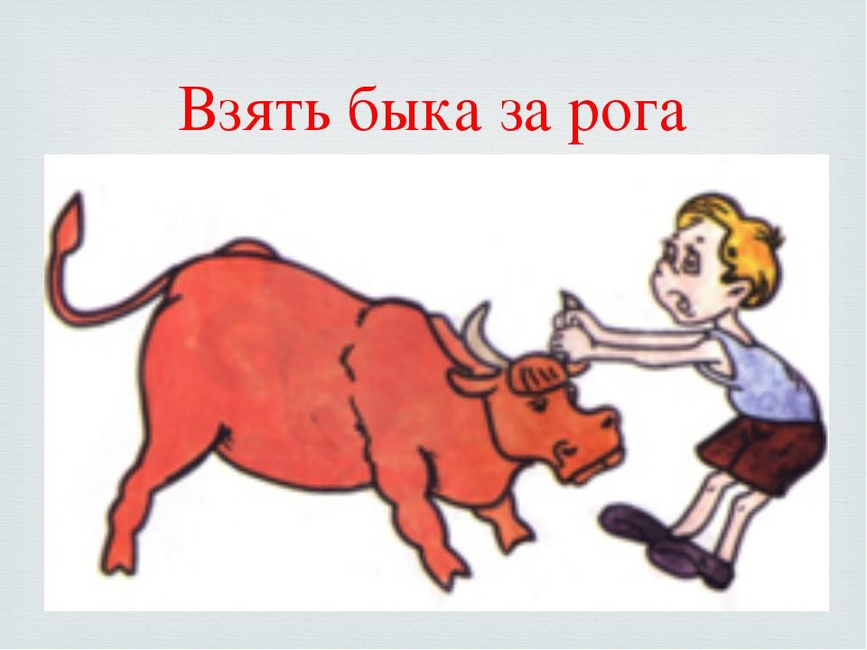 Взять быка за рога 