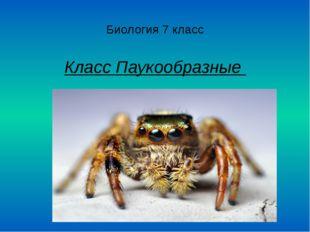 Биология 7 класс Класс Паукообразные