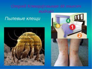 Отряд Клещи(свыше 48 тысяч видов) Пылевые клещи