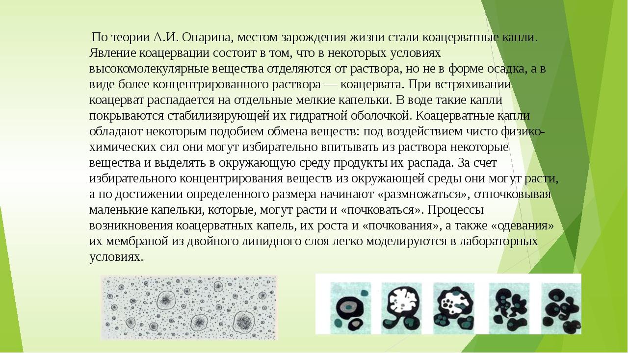 По теории А.И. Опарина, местом зарождения жизни стали коацерватные капли. Яв...