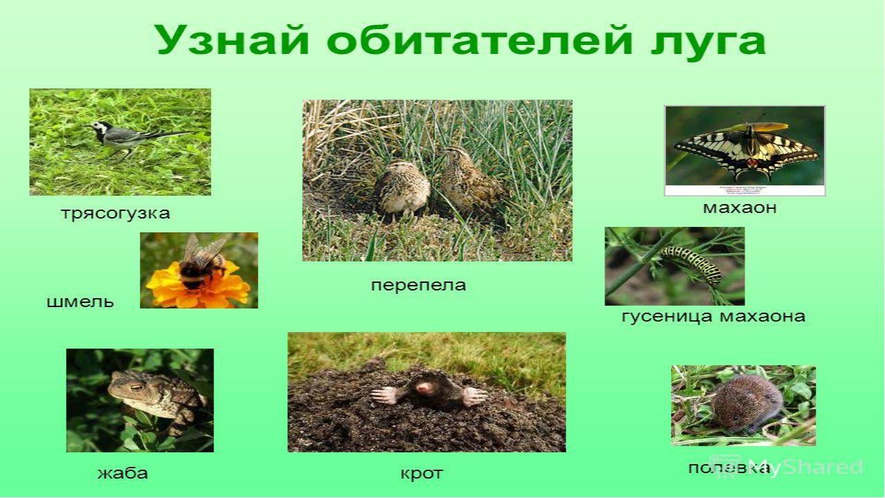 Ядовитые полевые растения фото и названия простая блузка