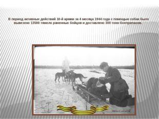 В период активных действий 10-й армии за 4 месяца 1944 года с помощью собак б