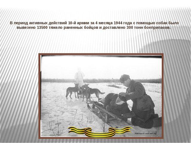 В период активных действий 10-й армии за 4 месяца 1944 года с помощью собак б...