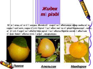 Лимон Апельсин Мандарин Көп ұялы, көп тұқымды. Жемістің сыртқы қабатында эфир